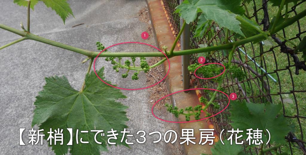 果房 花穂